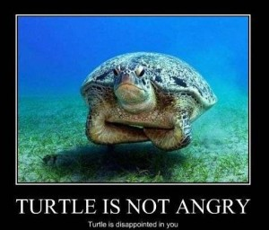 turtle_is_not_angry_-_turtle_is_disappointed_in_you