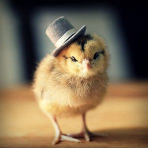 Cute-Chicks-in-Hats-photo-by-Julie-Persons-1