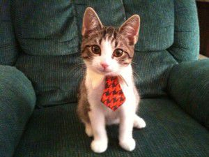 executive-kitten-big