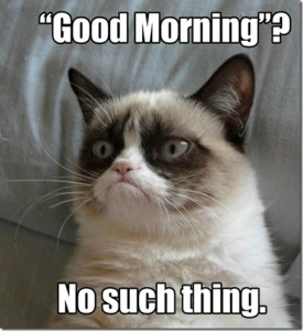 grumpy-cat-meme-good-morning-no-such-thing_thumb